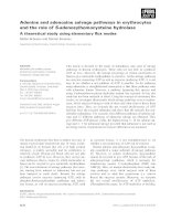 Báo cáo khoa học: Adenine and adenosine salvage pathways in erythrocytes and the role of S-adenosylhomocysteine hydrolase A theoretical study using elementary flux modes Stefan Schuster and Dimitar Kenanov ppt