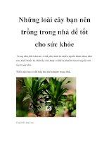 Những loài cây bạn nên trồng trong nhà để tốt cho sức khỏe docx