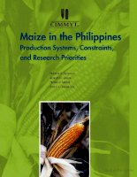maize in the philippines production systems pot