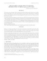 MỘT SỐ KHÍA CẠNH KỸ THUẬT VÀ KINH TẾ MÔ HÌNH NUÔI CÁ CHÌNH (Anguilla sp.) Ở CÀ MAU