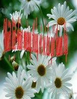 Giáo án bồi dưỡng sinh học 8 bài 14 Bạch cầu miễn dịch