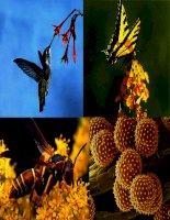 bài 42 sinh sản hữu tính ở thực vật (GV Nguyễn Thanh Cần)