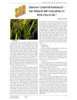 (Systemic Acquired Resistance(Resistance) – một hướng đi mới trong phòng trị bệnh cháy lá lúa ? pot
