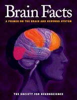 brain facts a primer on the brain and nervous system - the society for neuroscience