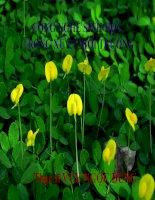 giáo trình công nghệ sinh học môi trường bài 7 thực vật