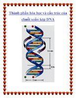 Thành phần hóa học và cấu trúc của chuỗi xoắn kép DNA docx