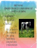 Giáo án sinh học lớp 9 Thực hành tìm hiểu thành tựu chọn giống vật nuôi và cây trồng