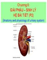 chương 6 giải phẩu – sinh lý hệ bài tiết (p2)