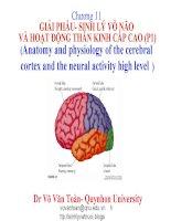 chương 11 giải phẩu- sinh lý vỏ não và hoạt động thần kinh cấp cao (p1)