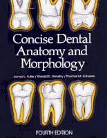 concise dental anatomy and morphology 4th ed.  -  j. fuller, et. al., (univ. iowa college of dentistry, 2001)