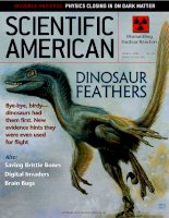 scientific american   -  2003 03  -  dinosaur feathers