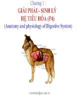 chương 1  giải phẩu- sinh lý hệ tiêu hóa (p4)