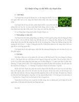 Kỹ thuật trồng và chế biến cây thạch đen