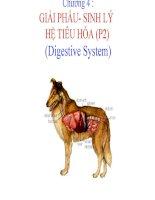 chương 4  giải phẩu- sinh lý hệ tiêu hóa (p2)