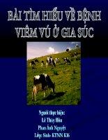 tìm hiểu về bệnh viêm vú ở gia súc
