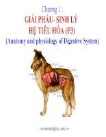 chương 1  giải phẩu- sinh lý hệ tiêu hóa (p3)