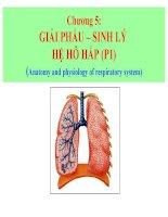 chương 5 giải phẩu – sinh lý hệ hô hấp (p1)