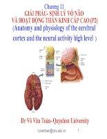 chương 11 giải phẩu- sinh lý vỏ não và hoạt động thần kinh cấp cao (p2)