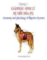 chương 1  giải phẩu- sinh lý hệ tiêu hóa (p2)