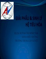 Bài giảng Giải phẩu và sinh lý hệ tiêu hóa - BS Huỳnh Thị Minh Tâm