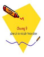 bài giảng sinh lý người và động vật chương 9 sinh lý cơ và thần kinh