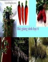 Bài giảng điện tử môn sinh học: biến dạng của rễ cây pot
