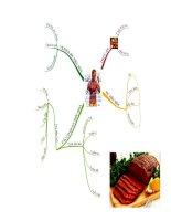 Giáo án điện tử môn môn sinh học: mô hình cơ quan tiêu hóa potx