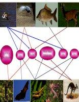 Giáo án điện tử môn môn sinh học: sự di chuyển của động vật pdf