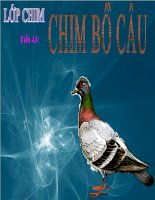 Bài giảng điện tử môn sinh học: tìm hiểu về lớp chim pdf