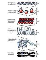 Giáo án điện tử môn môn sinh học: đa dạng của nghành ruột khoang ppt