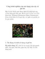 Công trình nghiên cứu tác dụng của cây cà gai leo ppt