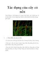 Tác dụng của cây cỏ nến pot