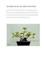 Kỹ thuật chẻ tạo cây cảnh có bộ rễ đều ppt