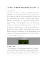 Quy Trình Kỹ Thuật Trồng Sắn Đạt Năng Suất Cao pdf
