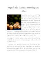 Một số điều cần lưu ý khi trồng dừa xiêm potx