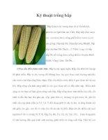 Kỹ thuật trồng bắp doc