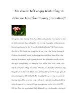 Xin cho em biết về quy trình trồng và chăm sóc hoa Cẩm Chướng ( carnation)? potx