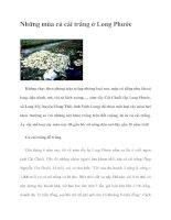 Những mùa củ cải trắng ở Long Phước pdf