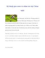 Kỹ thuật gieo ươm và chăm sóc cây Chùm ngây pdf