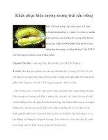 Khắc phục hiện tượng sượng trái sầu riêng pdf