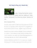 Kỹ thuật trồng cây chanh dây potx
