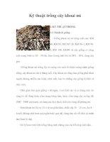 Kỹ thuật trồng cây khoai mì pdf