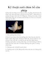 Kỹ thuật nuôi chim bồ câu pháp docx