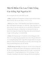Một Số Điểm Cần Lưu Ý Khi Trồng Các Giống Ngô Ngọt Lai F1 pdf