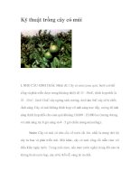 Kỹ thuật trồng cây có múi ppt
