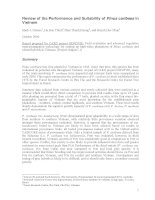Review of the Performance and Suitability of Pinus caribaea in Vietnam potx