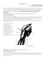 Bài giảng giải phẫu học: Vùng cánh tay pdf