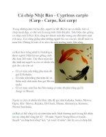 Cá chép Nhật Bản - Cyprinus carpio (Carp - Carpe, Koi carp) potx
