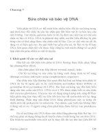 Chương 7: Sửa chữa và bảo vệ DNA potx