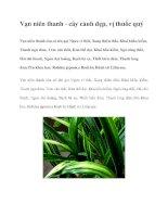 Vạn niên thanh - cây cảnh đẹp, vị thuốc quý pot